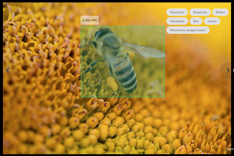 sunflower with bee boxed and identified using object recognition, related keywords and tags shown on the right